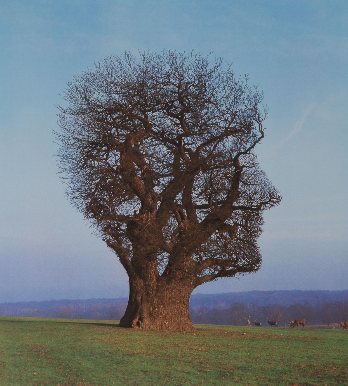 Tree of Half Life Storm Thorgerson