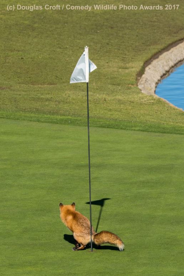 fox golf Hole-in-one shitting repost < lol < lol < nö