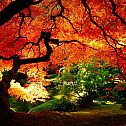 2013/10/earth-autumn-background-1920-x-1080-id-292378