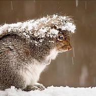 2014/11/squirrel-fears-snow
